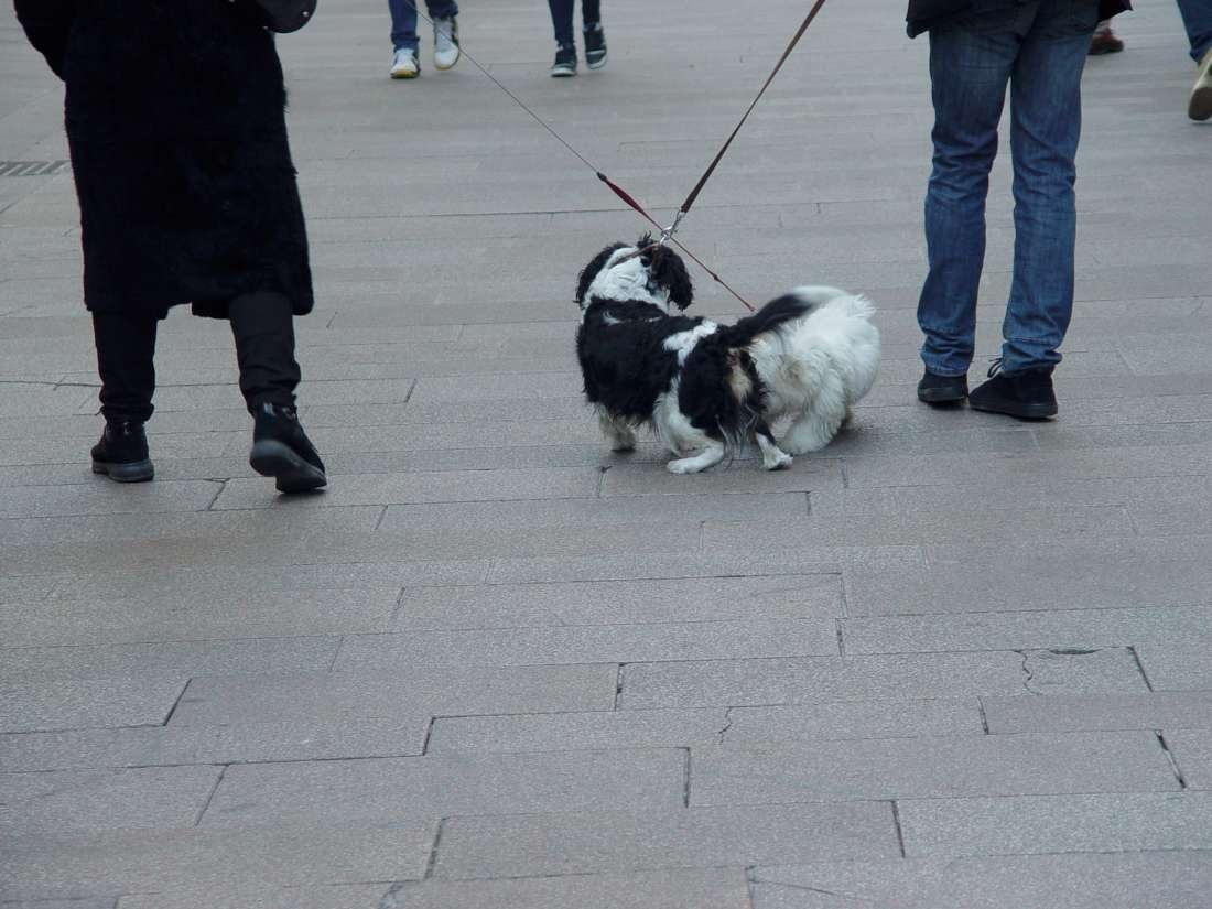 Dogs in Corso Vittorio Emanuele