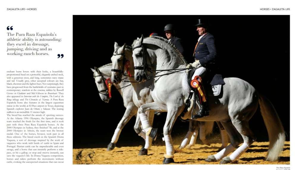Pura Raza Española horse